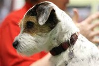 Discover Dogs at Excel 2019