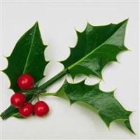 Warners Bembridge Pre-Christmas Weekend