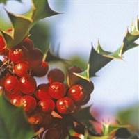 York, St Nicholas Fayre & Christmas Markets